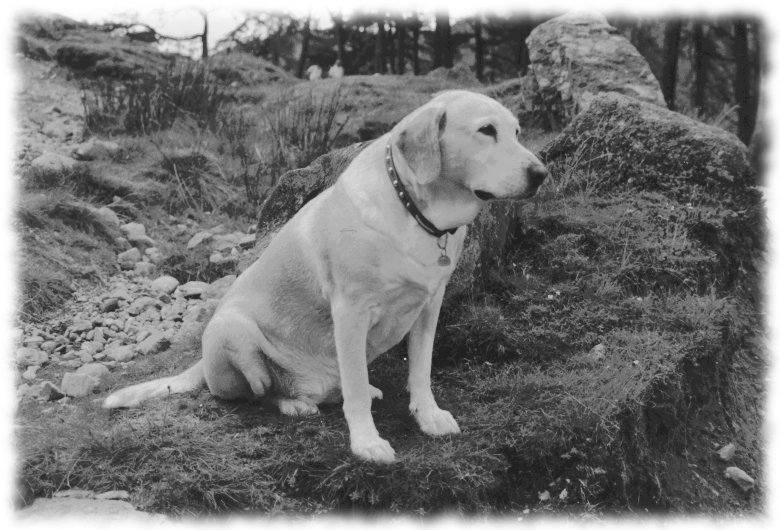 mistdog